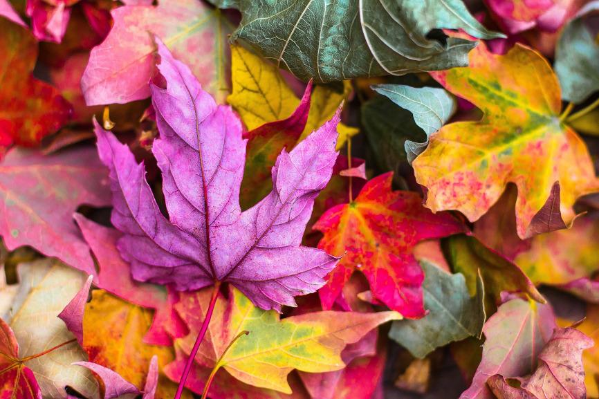 Leaf Colour